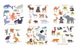 Ocean, Forest, Asian, Australian, African, Animals