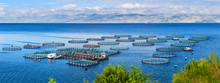 Sea Fish Farm. Cages For Fish Farming Dorado And Seabass. The Workers Feed The Fish A Forage. Seascape Panoramic Photography.