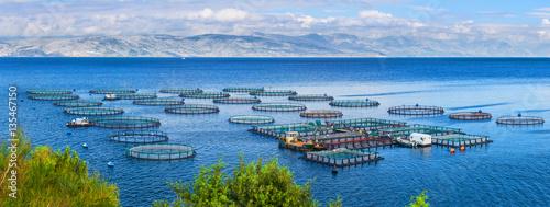Photo Sea fish farm