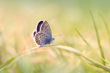 Butterfly Sitting On The Grass