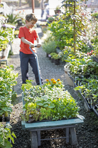 Foto op Canvas Tuin Boy pulling garden cart filled with plants