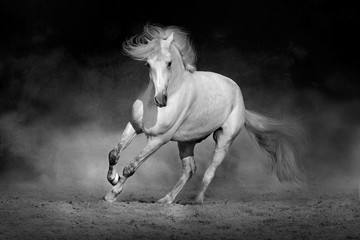 Obraz na płótnie Canvas Horse in motion in desert against dramatic dark background. Black and white picture