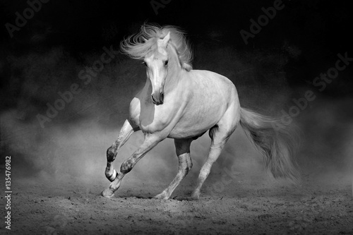 Fototapety, obrazy: Horse in motion in desert  against dramatic dark background. Black and white picture