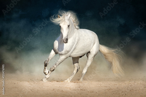 Foto op Canvas Paarden White horse run forward in dust on dark background