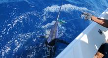 Big Game Fishing. Marlin On Th...