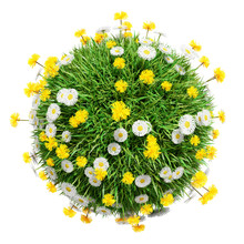 Green Grass Sphere With Flowers