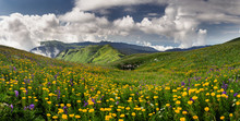 Beauty Mountain Panorama Landscape With Field Of Wild Flowers