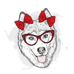 Dog with bows. Vector illustration. Cute Husky