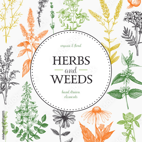 Vector design with hand drawn weeds and herbs Canvas Print