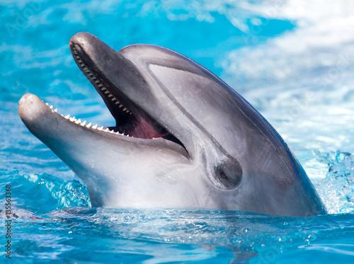 Foto op Plexiglas Dolfijnen Dolphin in the pool