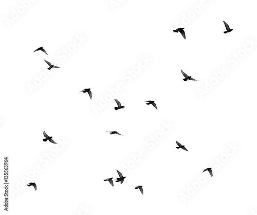 Staande foto Vogel flock of pigeons on a white background