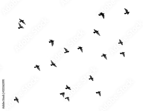 Foto flock of pigeons on a white background