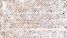 Bright Mosaic Pattern Rock Dust Fragments