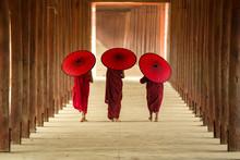 Tree Novice Monks Walking In T...