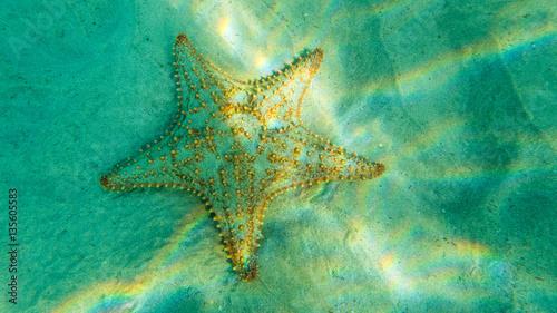 Seestar on ocaen floor in beautiful sunlight Canvas Print