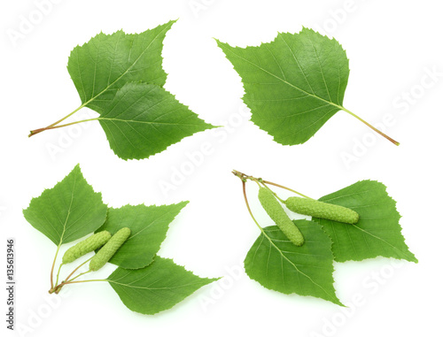 Birch leaves isolated. set Wall mural
