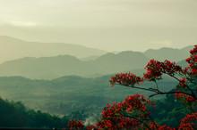 Rainforest Surrounding Luang P...