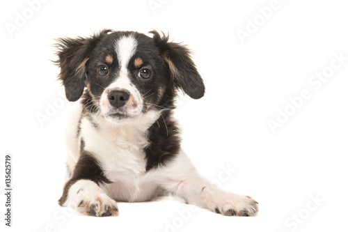 Photographie  Cute mixed breed black and white puppy dog facing the camera lying on the floor