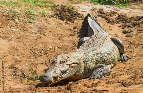 Foto op Plexiglas Krokodil Nile Crocodile - Crocodylus niloticus, Galana river, Kenya