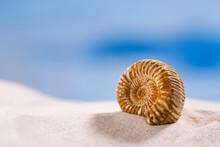Ammonite Nautilus Shell  On Wh...