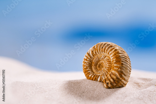 Fototapeta  ammonite nautilus shell  on white beach  sand