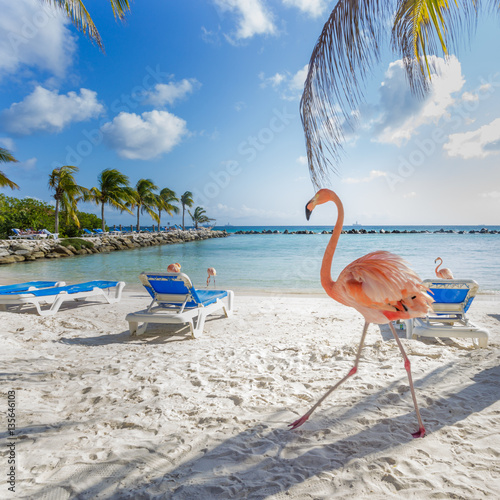 Garden Poster Flamingo Three flamingos on the beach