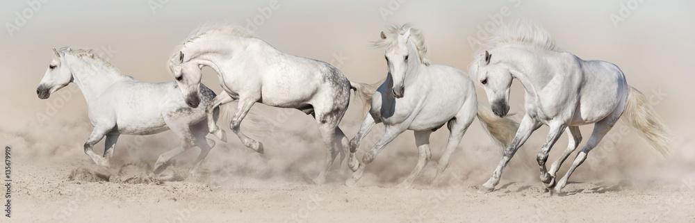 Fototapety, obrazy: White horse herd run in desert dust. Light panorama for web