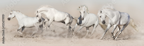 White horse herd run in desert dust. Light panorama for web