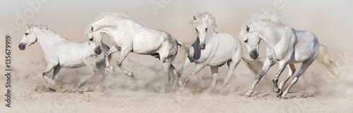 Foto op Canvas Paarden White horse herd run in desert dust. Light panorama for web