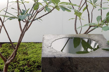 Water Feature And Tree In Japanese Style Garden
