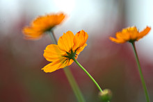 Orange Flower With A Colorful Background