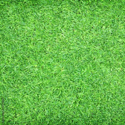 Foto op Plexiglas Groene Green grass natural background. Top view