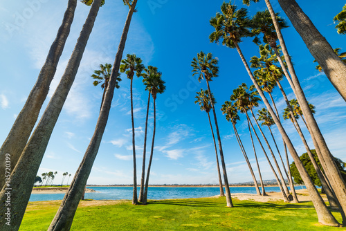 Palm trees in San Diego shoreline