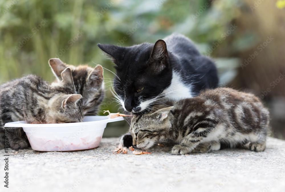 Stampe  wild street cat