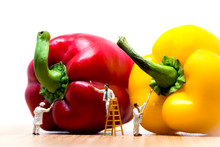 Painters Coloring Bell Pepper....
