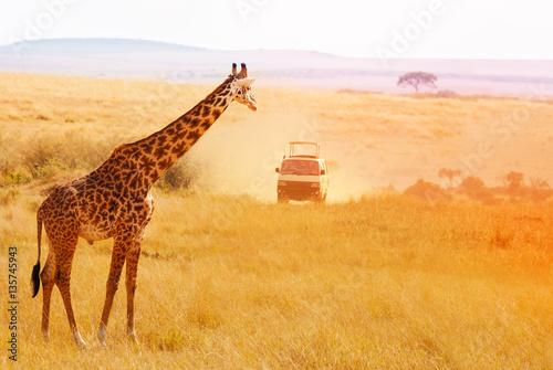 Picture of beautiful giraffe at sunset, Africa Wallpaper Mural