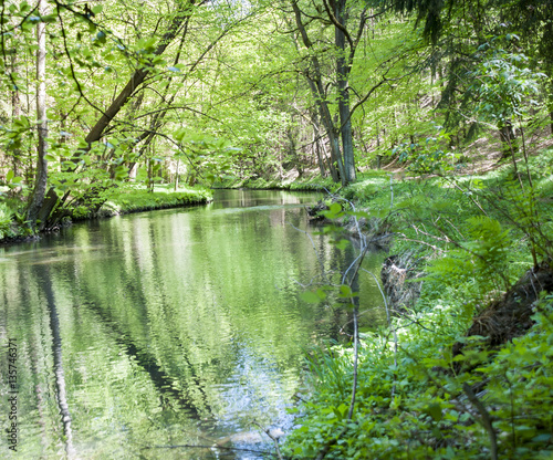River In The Wood Forest River Scene Beautiful Landscape
