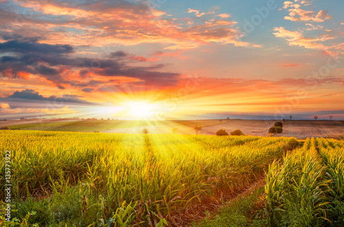 Fotobehang Platteland Sunrise over the corn field