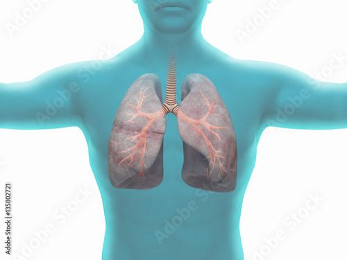 Fotografie, Obraz  Polmoni malati di fumatore o con tumore