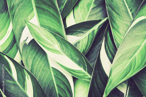 Poster  Fresh tropical Green leaves background