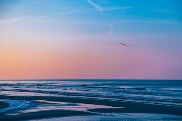 FototapetaMewa na plaży