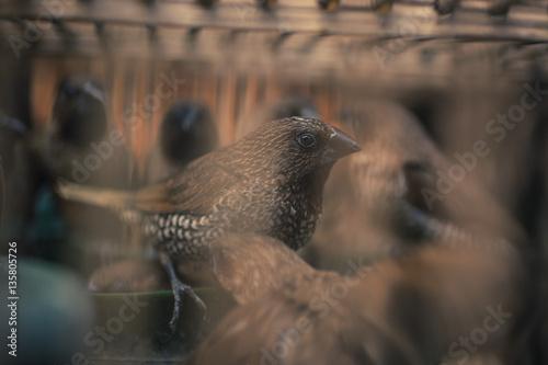 Fényképezés  Birds in a cage