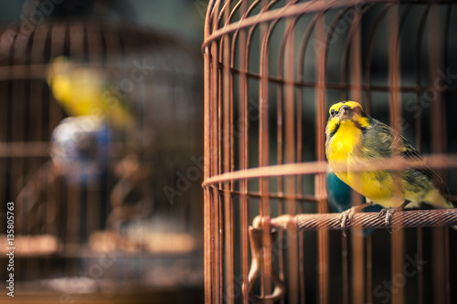 Photo  Yellow bird in a cage