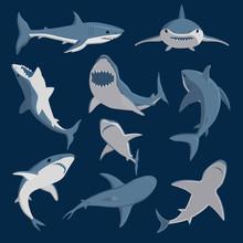 Vector Shark Comic Style Character Wild Fish Set.