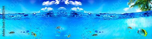 Fotografie, Obraz  Deniz ve Balıklar