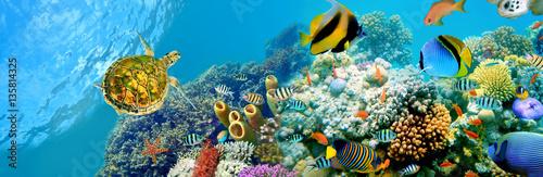 Naklejki akwarium  ryby-i-morze-panoramiczne