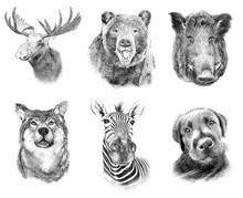 Set On Animals On White  Backg...
