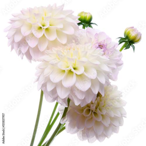 Poster de jardin Dahlia Beautiful bouquet