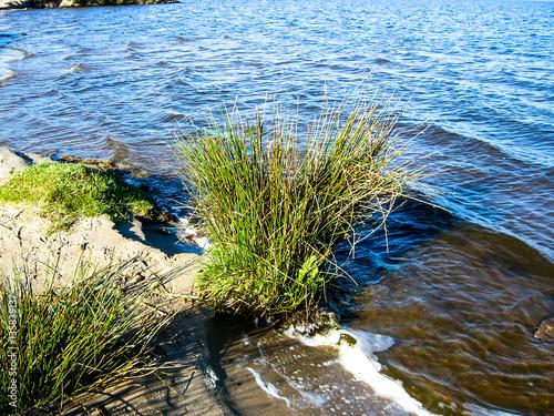 Fotografie, Obraz  Oceanside Netherlands