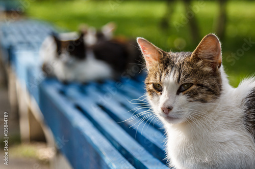 Cute cat on the bench in front of parliament of Tiraspol, Transn